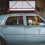 Dog Point joins the Bancroft Portfolio