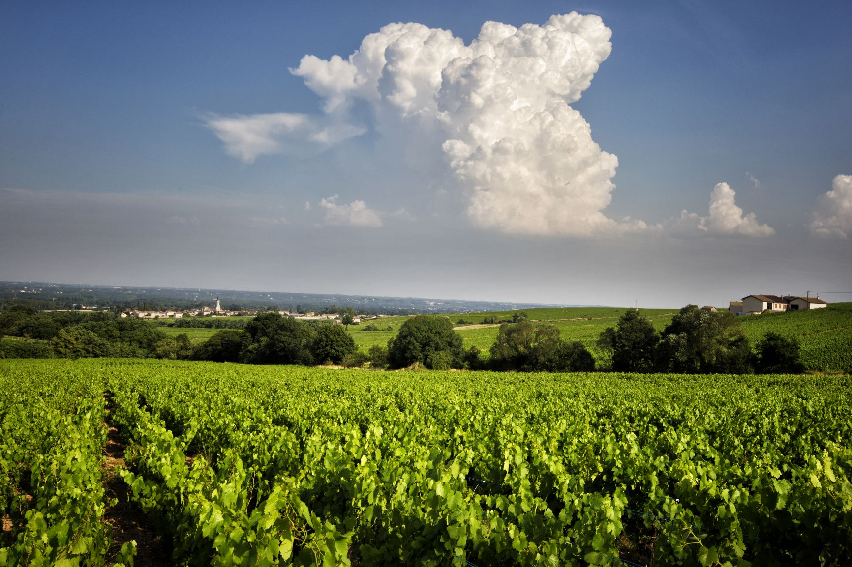 Three Beaujolais Properties Join The Bancroft Portfolio