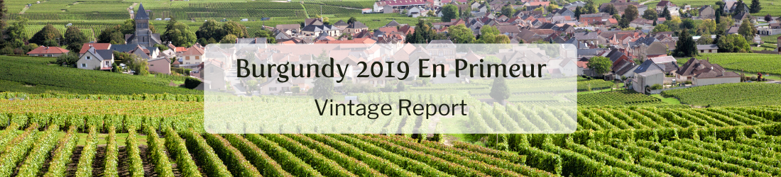 Copy of Burgundy 2019 En Primeur Vintage Report (10)