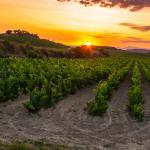 2020 & 2021 Top Rioja's by Tim Atkin MW